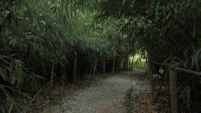 Lopend door de bamboesteeg, botanisch park Georgië stock videobeelden