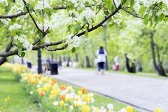 Lopend gelukkige mensen, families met kinderen in park, tulpen en bloemen van sakura, kers, komt de appel, zonnige dag tot bloei Stock Foto's