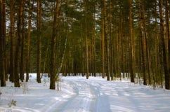 Lopend in het de winterbos in Wit-Rusland, Minsk Royalty-vrije Stock Afbeelding