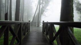 Lopend langs Houten Gang door het Nationale Park van Alishan in Mist, Nevel en Mist Ontwikkelde Infrastructuur in Bos stock video