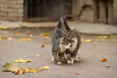 Lopend paar van twee het houden van katten Stock Foto