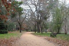 Lopend spoor en lege parkbank in een park in de herfst Stock Afbeelding