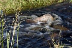 Lopend water met rotsen en gras Stock Foto's