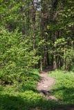 Lopend weg in bos een t-ochtend met mooie zonnestralen Royalty-vrije Stock Foto's