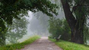 Lopend weg met diverse selectie van bomen binnen - tussen vulling met ochtendmist in Toompark stock foto's