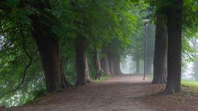Lopend weg met diverse selectie van bomen binnen - tussen vulling met ochtendmist in Toompark stock afbeeldingen