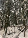 Lopend weg in sneeuw binnen bos met sneeuw behandelde pijnboombomen die wordt behandeld stock afbeelding
