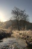 Lopende beek op een koude de lenteochtend Royalty-vrije Stock Foto's