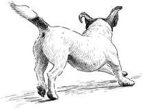 Lopende hond Stock Foto's