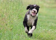 Lopende hond royalty-vrije stock foto's