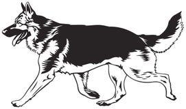 Lopende hond, Duitse herderlooppas Stock Foto's