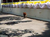 Lopende hond naast de tempel, Bangkok, Thailand stock afbeeldingen