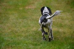 Lopende natte hond Royalty-vrije Stock Afbeeldingen