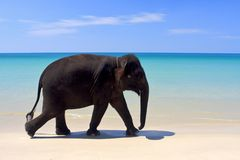Lopende olifant Stock Afbeelding