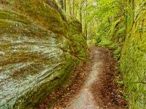 Lopende Weg, Forest Trail Stock Foto's