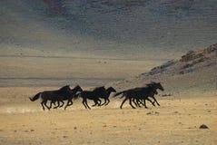 Lopende wild paarden Stock Foto