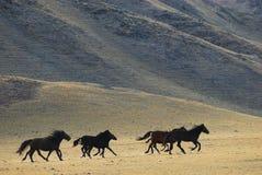 Lopende wild paarden Royalty-vrije Stock Foto's