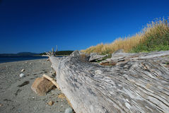 Lopez Island beach, Washington, USA. San Juan islands beach log, Lopez Island, Washington, USA stock photos