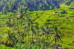 Lopp Bali Indonesien Royaltyfri Fotografi