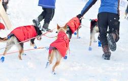Lopp för hund för Baikal loppsläde Royaltyfria Foton