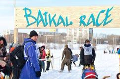 Lopp för hund för Baikal loppsläde Arkivbilder