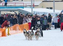 Lopp för slädehund i Kharkiv, Ukraina Fotografering för Bildbyråer