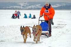Lopp för slädehund på insnöad vinterdag Arkivbild