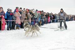 Lopp för slädehund på insnöad vinterdag Arkivfoto