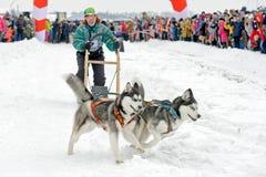 Lopp för slädehund på insnöad vinterdag Royaltyfri Fotografi
