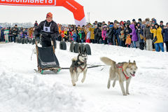 Lopp för slädehund på insnöad vinterdag Royaltyfri Foto