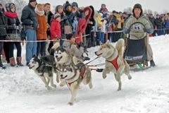 Lopp för slädehund på insnöad vinterdag Royaltyfri Bild
