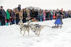 Lopp för slädehund på insnöad vinterdag Fotografering för Bildbyråer