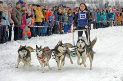 Lopp för slädehund på insnöad vinterdag Arkivbilder
