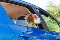 Lopp i den blåa bilen Royaltyfria Foton