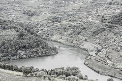Lopp i den flodDouro regionen Royaltyfri Foto