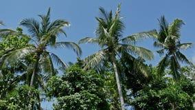 Lopp 4k för palmträdAsien tropiskt natur lager videofilmer