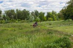 Lopp med cykeln Arkivfoto