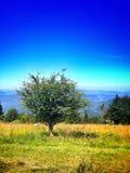 Lopp på bosnisk mountaine Royaltyfri Bild