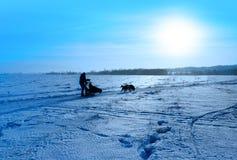 Lopp på hunden teams i norden Royaltyfria Foton