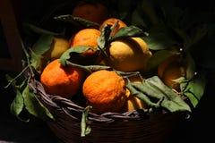 Lopp Spanien: bunke mycket av mogna citroner och apelsiner royaltyfria foton