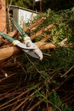 Loppers on trees B Stock Photo