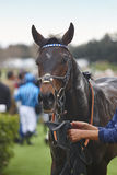 Lopphäst och jockey efter loppet Paddockområde royaltyfri fotografi