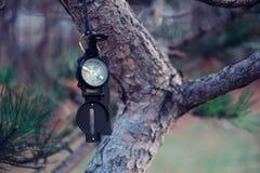 Loppkompass på träd arkivbild