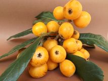 Loquat fruits. On the table Stock Images