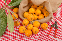 Loquat harvest. Still life with some freshly picked loquats Stock Images