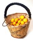 loquat koszykowy zbieracz Zdjęcie Royalty Free