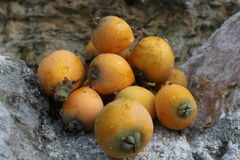 Loquat naturel Photographie stock