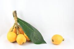 Loquat owoc Fotografia Stock