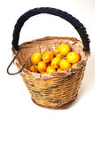 Loquat picker basket. Traditional crop basked with freshly picked loquats Royalty Free Stock Photo