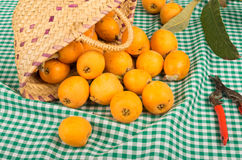 Loquat still life Royalty Free Stock Photo